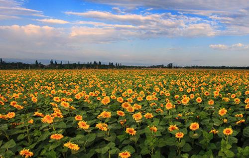 新疆哈密基地